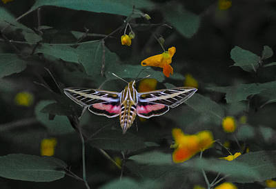 Sports Royalty-Free and Rights-Managed Images - Moth 3 by David Tennis