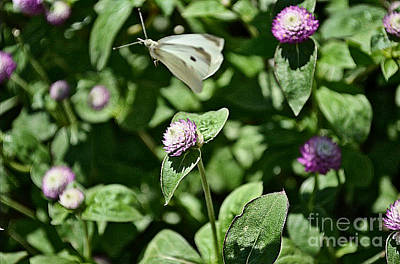 Photograph - Moth And Clover by Luther Fine Art