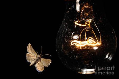 Photograph - Moth At Lightbulb by Scott Linstead