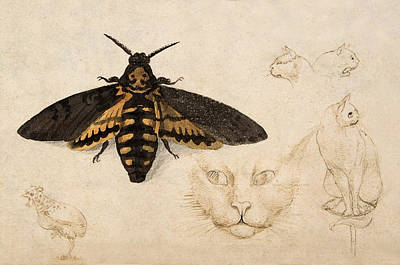 Pen And Ink Illustration Painting - Moth, Chicken, Cats, C. 1535 Detail by Metropolitan Museum of Art