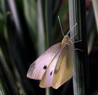 Moth In Light Art Print