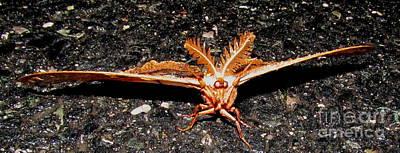 Moth Man Photograph - Moth Man by Joshua Bales