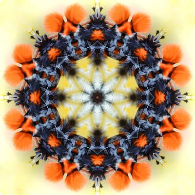 Photograph - Moth Mandala by Beth Sawickie