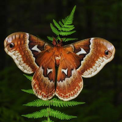 Photograph - Moth On A Fern by Steve Hurt