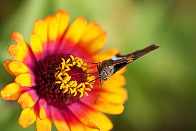 Butterfly On Flower Original