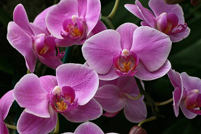 Photograph - Moth Orchid 7 by Allen Beatty