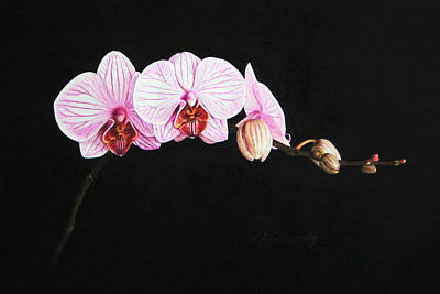 Art Print featuring the drawing Moth Orchid by Marna Edwards Flavell