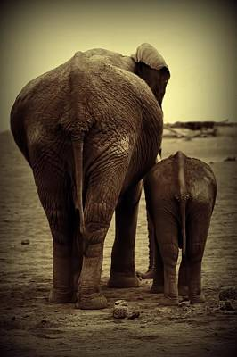 Mother And Baby Elephant In Black And White Art Print