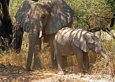 Photograph - Mother And Baby Elephant by Louise Peardon