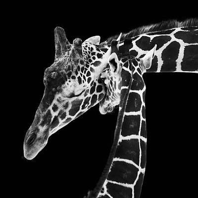 Monochrome Photograph - Mother And Baby Giraffe by Adam Romanowicz