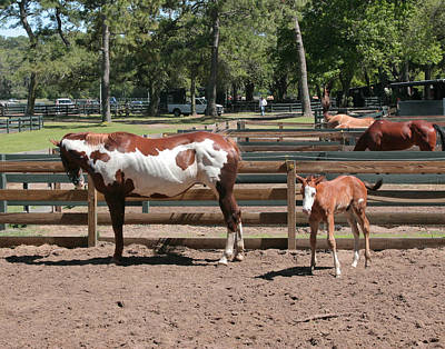 Photograph - Mother And Baby Horses by Mary Almond