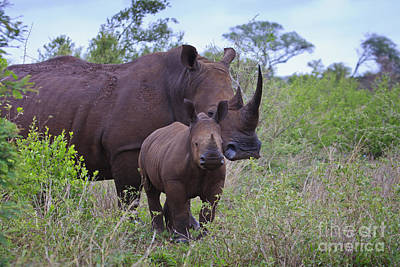 Mother And Baby Rhino Art Print