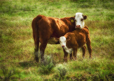 Mother And Calf Art Print by John Trax