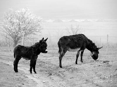 Donkey Foal Photograph - Mother And Child by Gabriela Insuratelu