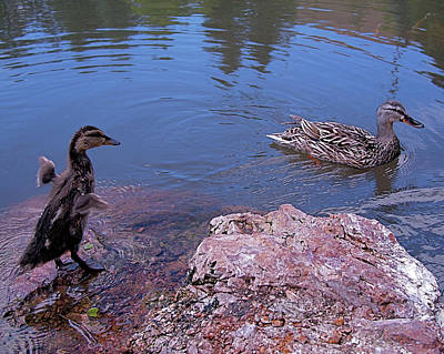 Mallard Duck Photograph - Mother And Child by Rona Black