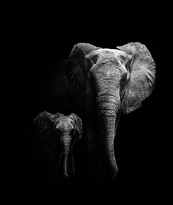 Baby Elephant Wall Art - Photograph - Mother And Child by Wildphotoart