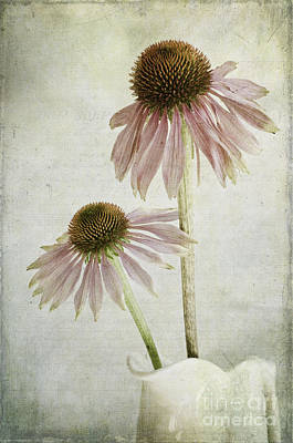 Coneflowers Photograph - Mother And Daughter by Marion Galt