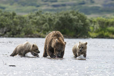 Photograph - Mother Brown Bear With Two Cubs Ready To Eat by Dan Friend