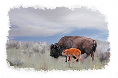 Photograph - Mother Buffalo With Baby Buffalo by Dan Friend