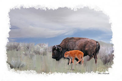 Photograph - Mother Buffalo With Baby by Dan Friend