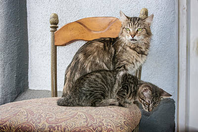 Mother Cat And Kitten On Chair Art Print