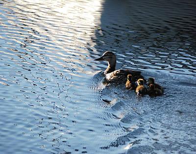 Mother Duck With Babies Canandaigua Lake 2008 Art Print by Joseph Duba