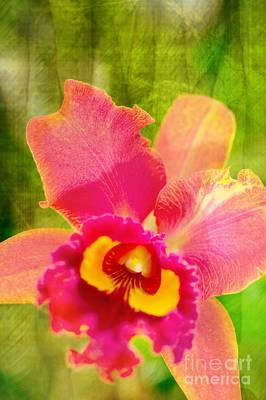 Flora Photograph - Mother by Floyd Menezes
