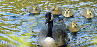 Photograph - Mother Goose And Brood by Brenda Brown