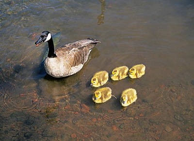 Vermeer Rights Managed Images - Mother Goose Royalty-Free Image by Buddy Mays