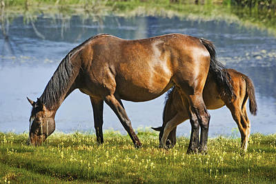 - Mother Horse And Baby by Abram House