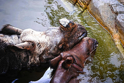 Photograph - Mother Love by DiDi Higginbotham