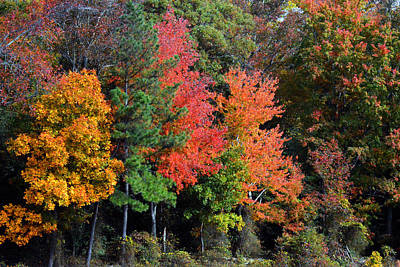 Photograph - Mother Nature's Color Splash by Bill Swartwout