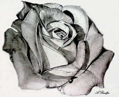 Rose Drawing - Mother Rose by Andrea Realpe