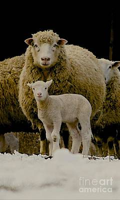 Sheep Photograph - Motherhood by Linda Simon
