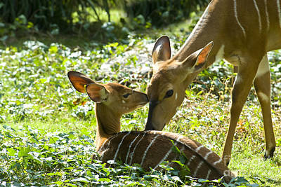Photograph - Motherly Love by Anthony Sacco