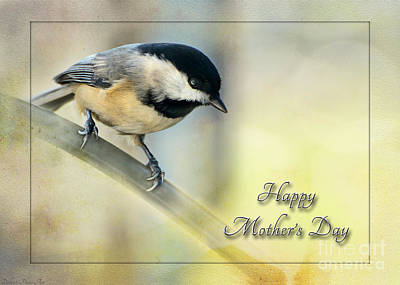 Photograph - Mother's Day Greeting Card  Chickadee I by Debbie Portwood