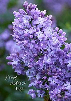 Photograph - Mothers Day Lilacs by Diana Haronis