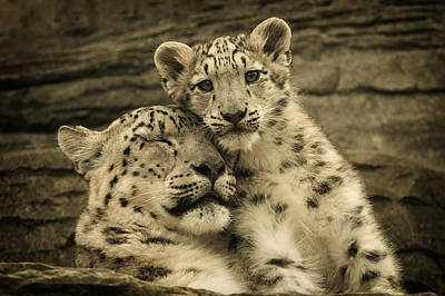Photograph - Mother's Love by Chris Boulton