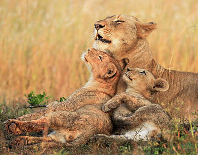 Cub Photograph - Mothers Love by Jaco Marx