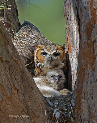 Photograph - Mother's Love by Mike Fitzgerald