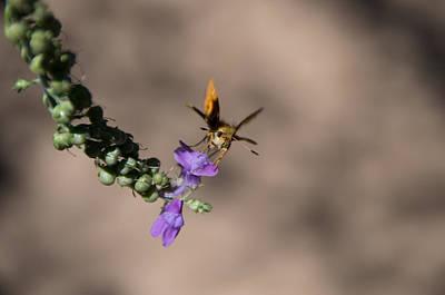 Photograph - Mothra by Marilyn Wilson