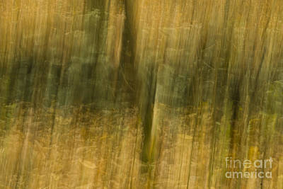 Photograph - Motion Series - 123 by Paul W Faust -  Impressions of Light