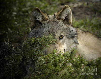 Motionless Print by Wildlife Fine Art