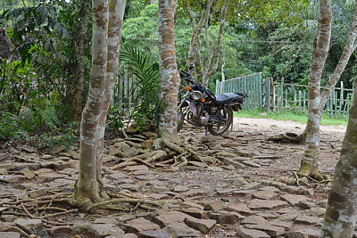 Photograph - Motorcycle At Kakum Park by Ronda Broatch