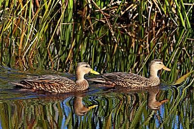 Photograph - Mottled Duck Pair by Ira Runyan
