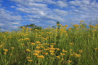 Mount Cheaha Goldenrod-alabama Art Print by Mountains to the Sea Photo