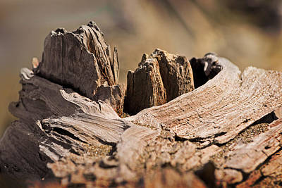 Photograph - Mount Driftwood by Jon Exley