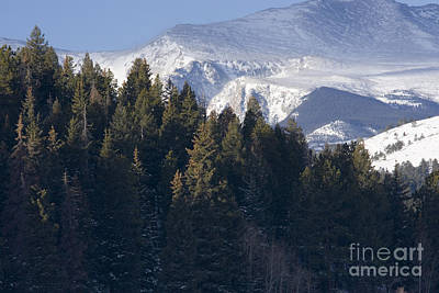 Steven Krull Royalty-Free and Rights-Managed Images - Mount Evans Woods by Steven Krull