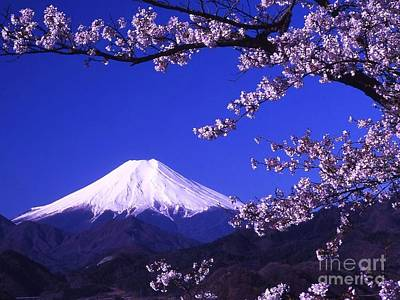 Fuji Mountain Photograph - Mount Fuji And Cherry Blossoms by Pg Reproductions