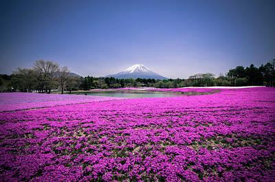 Photograph - Mount Fuji Mos Phloxx by Andreas Jensen
